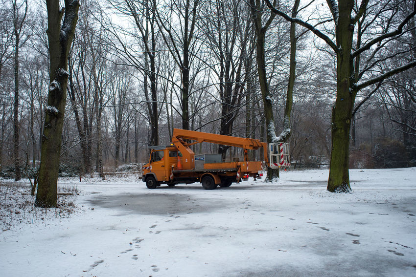 Berlin City City Life Cold Temperature Construction Machinery Construction Vehicle Day Europe Outdoors Snow Strees Streetphotography Tree Tree Trees Winter Winter