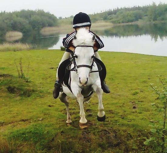 Horse One Animal Domestic Animals Grass Outdoors Day Nature Water Animal Themes Close-up Front View Pony Pony Ride