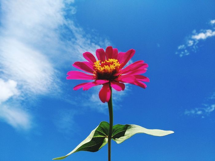 Close-up of flower against blue sky