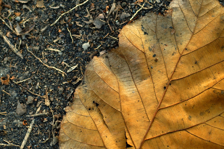 High angle view of dry leaves on wood in forest