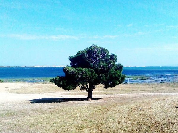 Taking Photos Nature Landscape Seaside Enjoying Life