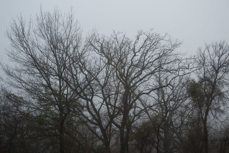Bare Tree Beauty In Nature Branch Day Foggy Morning Foggy Weather Low Angle View Nature No People Outdoors Sky Tree Treetop Winter