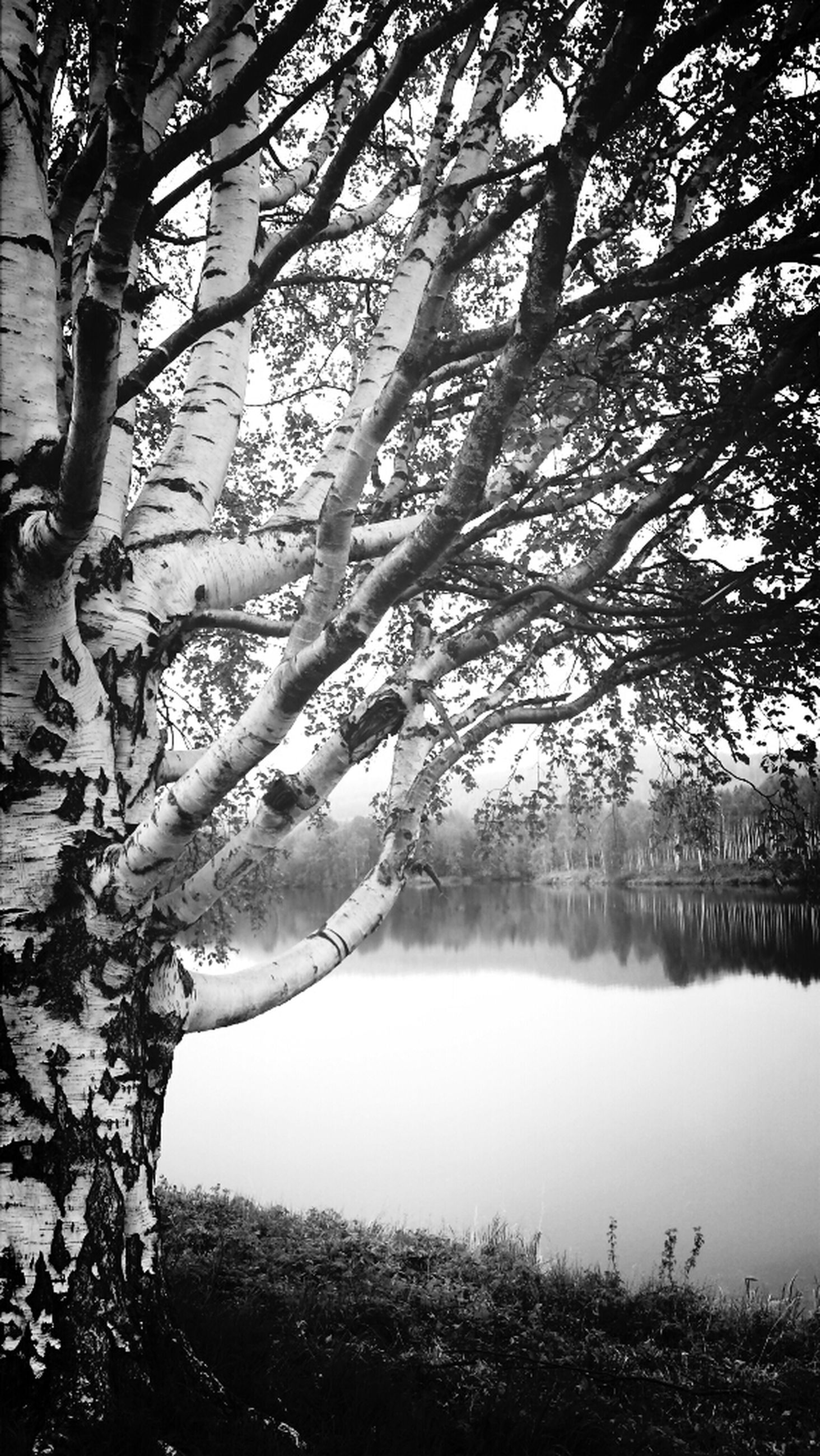 tree, branch, water, tranquility, tranquil scene, lake, nature, bare tree, beauty in nature, scenics, growth, tree trunk, sky, reflection, day, river, lakeshore, outdoors, non-urban scene, idyllic