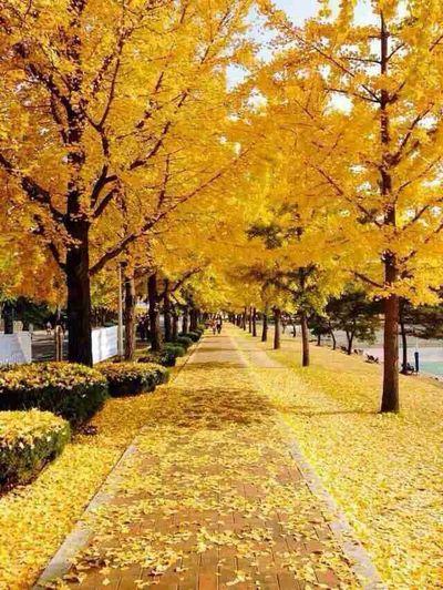 Yeungnam University