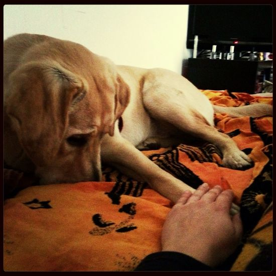 Mydog MyJoy Love