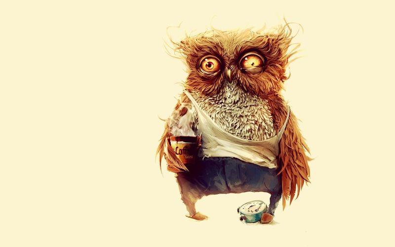 Animal Owl Nature Animal Themes Looking At Camera Sleepless Nights Morning Coffee Mornings