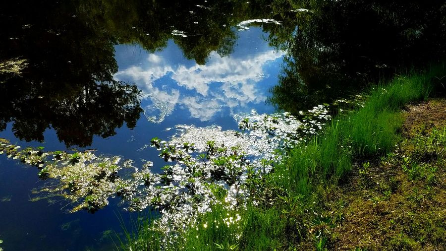 The Pond Edge Cloud Reflections Water Nature Reflection Tree Outdoors Blue Day Close-up Artistic Freshness Dramatic The Great Outdoors - 2017 EyeEm Awards Cloud - Sky Silhouette Zen Fragility Meditation Tranquility Spirituality Copy Space Hues Strong Breathing Space