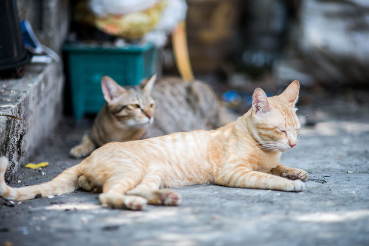 Animal Themes Cat Domestic Animals Domestic Cat Feline Focus On Foreground Lying Down Mammal One Animal Pets Portrait Relaxation Relaxing Resting Selective Focus Sitting Street Two Animals Whisker