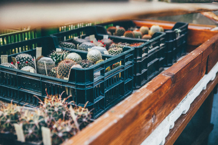 Cactuses growing in crates at greenhouse