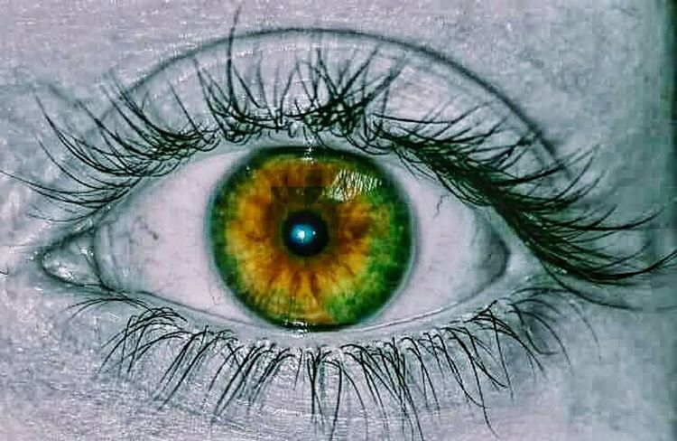 Colour Of Life Eye Naturalcolor