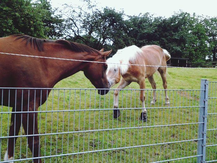 Horses Enjoying Life Country Life