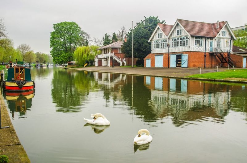 Landscape_Collection Landscape Beautiful Serenity Beauty In Nature Interesting River Canal Boat Swan Swans Boat House Cambridge Animal Themes Bird Birds Of EyeEm  Reflection Interesting Perspectives All In Focus Animalsofinstagram No People Landscape_lovers Landscape Beauty