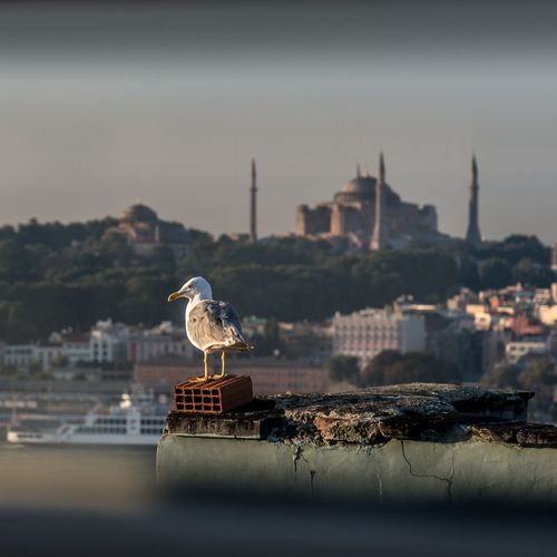 Bird Mosque No People Seagull Selective Focus Tourism