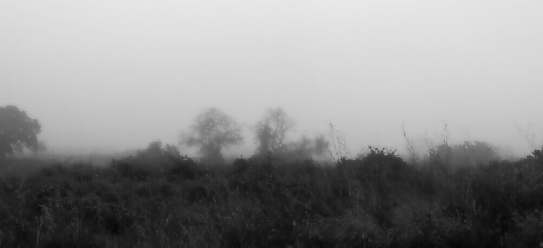 Fog Tree Catalunya Panorama Panoramic Panorámica Arbre Boira Vilallonga