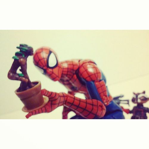 They dont grow these in new york!? Marvellegends Webhead Marveluniverse Spidey Spiderman Groot Potgroot Rocketracoon Discovery GaurdiansOfTheGalaxy Amazingspiderman Spiderman Figurecollecting Collector Randompic Marvel Peterparker Hasbro Disney Infiniteseries Classicspiderman Articulatedcomicbookart ACBA Actionfigurephotography
