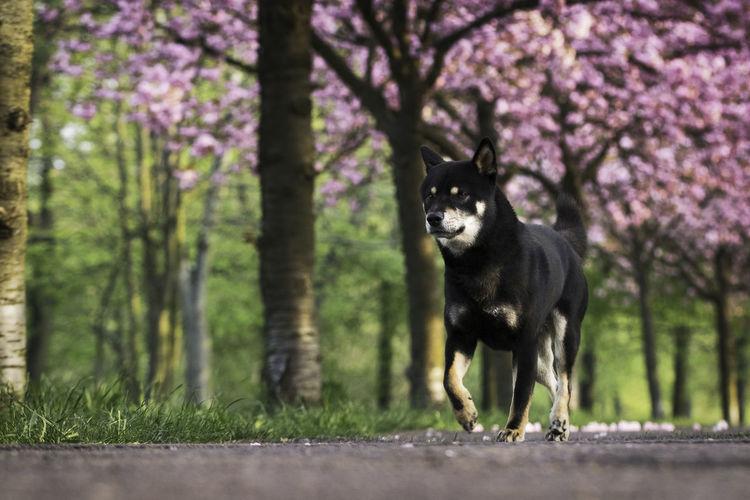 Portrait of a dog on ground