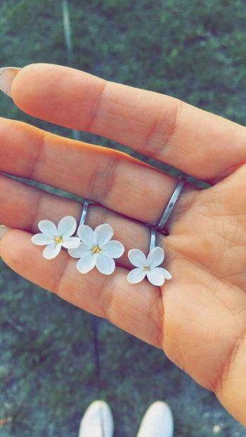 Make a wish 😊 Estonia Lilac Lilac Flower White Lilac Lilac Flowers Five Petal Flower Six Petal Lil Summer Love Summer Sunny
