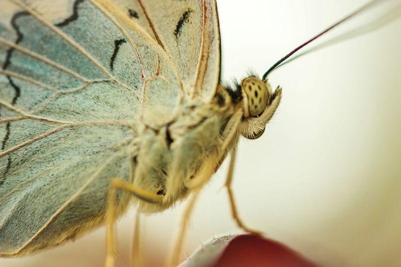 Macro shot of butterfly