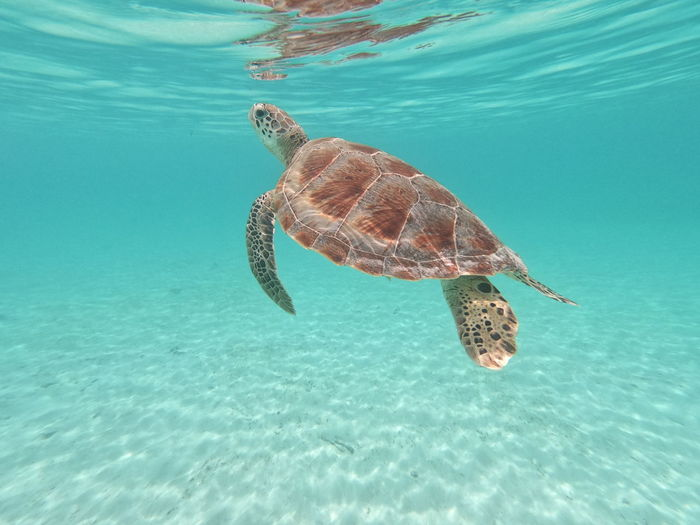 Sea turtle swimming in undersea
