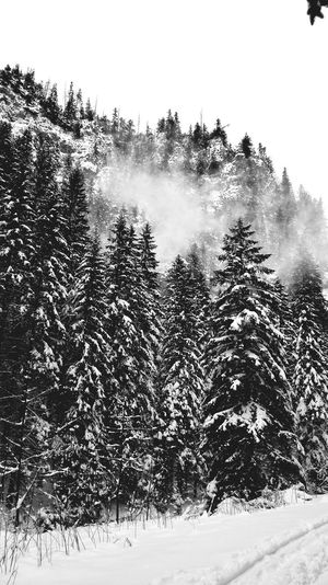 Kościelisko Dolinakoscieliska Kościeliskavalley Winter Poland GalosikFotografę Galosikphotigraphere Eyem Best Shots EyeEm Nature Lover Snow Forrest Photography Mountains