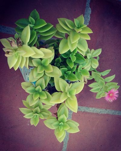 Leaf Growth Plant Green Color Fragility Freshness Nature Blossom Close-up No People Beauty In Nature Outdoors Day