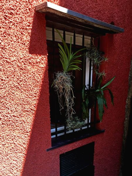 Window worlds No People Green Plants View From Ouside Window View Nature Plant Growth Potted Plant Building Exterior Architecture Built Structure No People Outdoors Nature Day Red Flower