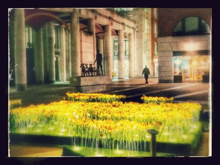 Paternostersquare Macmillan Flower Built Structure Architecture Daffodil Charity Paternoster Matt Hollick London LONDON❤ Huaweip9photos Night London Life Cityoflondon London Tourism Visitlondonofficial City Of London Tourism London Lifestyle St Pauls Cathedral Nature