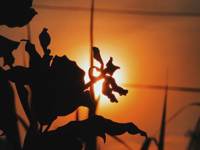 Close-up of silhouette man against orange sky