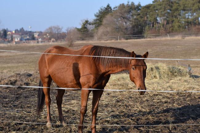 Gaol Horse