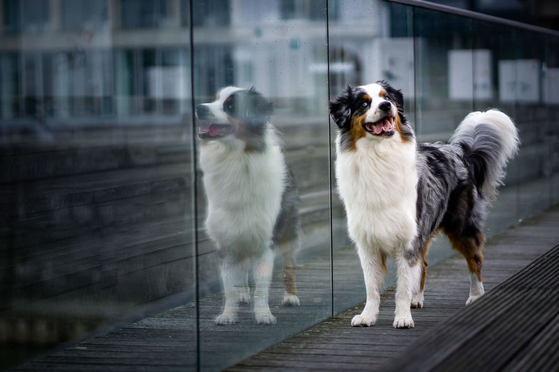 Portrait of dogs standing outdoors