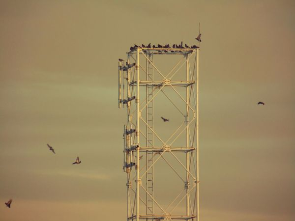 All i see is the ladder... Migratory Birds Samsung Camera Golden Hour The Minimals (less Edit Juxt Photography) Birds