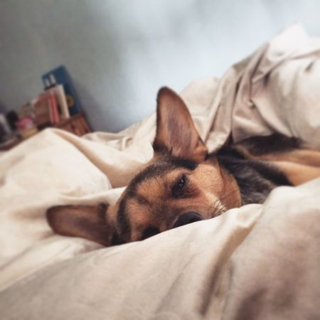Comfy Mixed Breed My Dog Spanish Dog Adopted Doglife My Everything Dog Love Doggy Morning Comfort Feeling Good Spanish Dogs Picture Puppy Photography