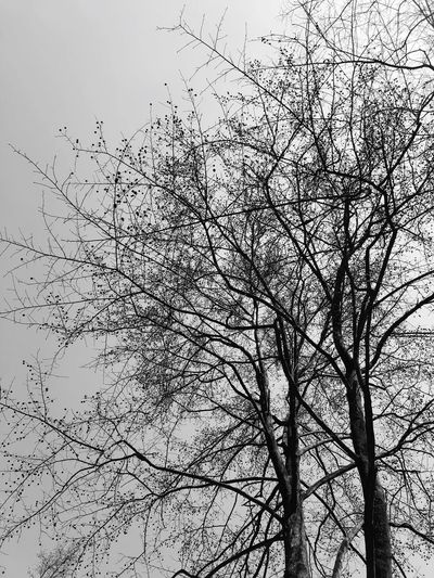 Bare Tree Tree Branch Low Angle View Nature Beauty In Nature No People