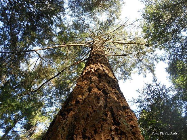 Waldspaziergang Wald Wood