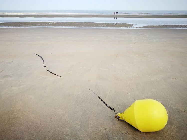 Es kommt zurück Carmente De Haan De Haan Belgium Bird Sea Beach Water Sand Sky