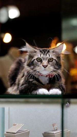 Kitten guarding jewelry