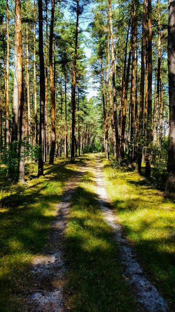 Amazing forests Poland Lubuskie Nature Polish Nature Polish Landscape Pine Trees The Smell Of Pine Tar >> Love It Trees Pine Tree Holidays ☀