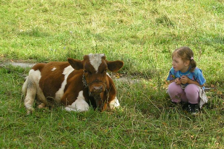 Girl Looking At Cow While Crouching On Grassy Field