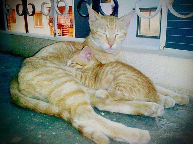 Animal Kitten Cats Animal Baby Cute Pets Cute♡ Furbaby Beautiful Animals