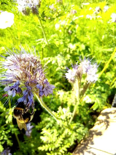 Flower Nature Plant Growth Outdoors Fragility Close-up Beauty In Nature Bumblebee Insect Photography Beautiful Blooming Blossom Beautiful Flower