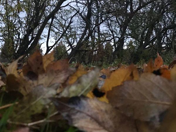 "36"" Autumn Rainy Days Waiting For Spring"