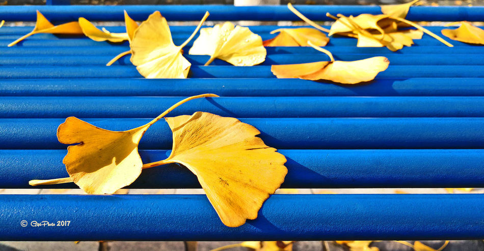 Autumn Yellow Blue No People Close-up Outdoors Day
