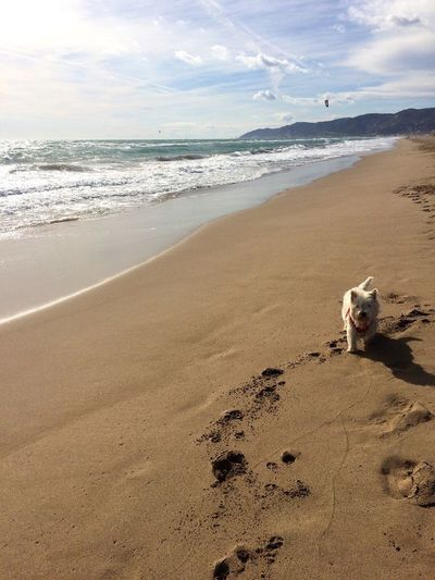 Sea Beach Pets Dog One Animal Full Length Castelldefels Barcelona Water Nature Mammal Real People Shore Horizon Over Water Animal Themes Sand Wave One Person Day Beauty In Nature Sky