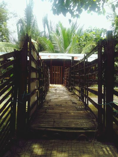 Tree Wood - Material Railing Day Outdoors No People Nature Sky Straight Forward Bamboo Pathway Wood Door