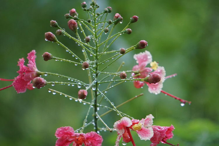 Growth Plant Freshness Beauty In Nature Close-up Nature Focus On Foreground Flower Day No People Fruit Fragility Food Flowering Plant Food And Drink Pink Color Healthy Eating Bud Vulnerability  Berry Fruit Outdoors Flower Head