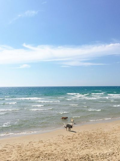 dogs Sea Water