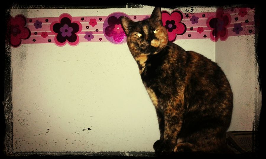 Nina ♡ Cat♡ I Love My Pet Gatosfelizes Happy Cat