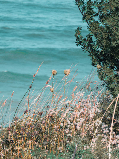 View of plants on beach