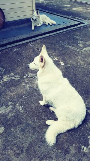 One Animal Animal Themes Domestic Animals Pets Cat Mammal Domestic Cat Feline Day Whisker Zoology Outdoors No People Dogslife Pastor Belga