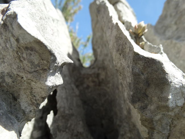 Climbing Close-up Day Low Angle View Nature No People Outdoors Rock - Object Rock Climbing Rock Face Rough Sky Textured  Tree Tree Trunk